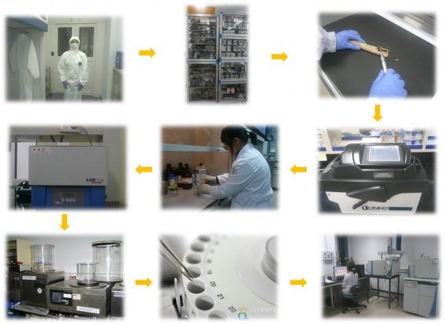 사람뼈에서 콜라겐을 추출하고 안정동위원소를 분석하는 과정 - 국립문화재연구소 제공